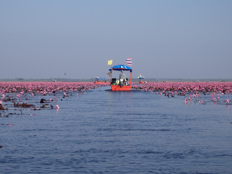 紅い睡蓮の海(タレー・ブア・デーン)